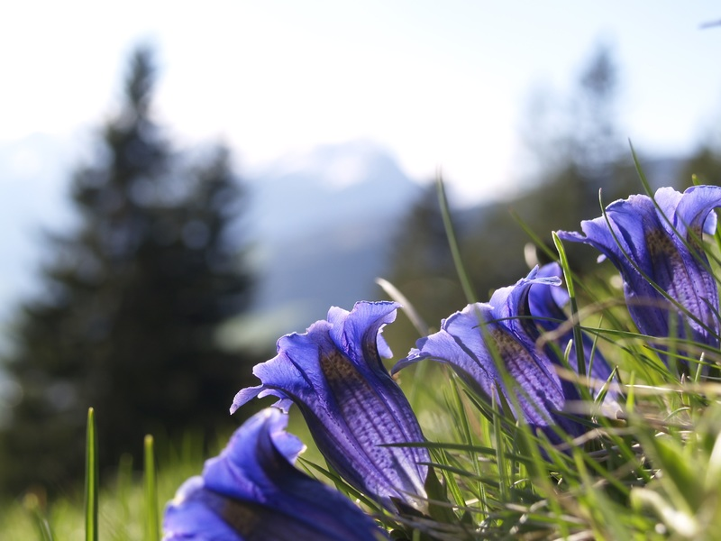 Flower On The Mountain